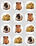 12 Guinea Pig design rice paper fairy / cup cake 40mm toppers pre cut cake decoration