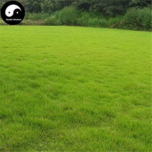 Kaufen Sie immergrüne weiche Manilagrass Semente 100pcs Samen Rasen Gras Zoysia Japonica - Zoysia Gras