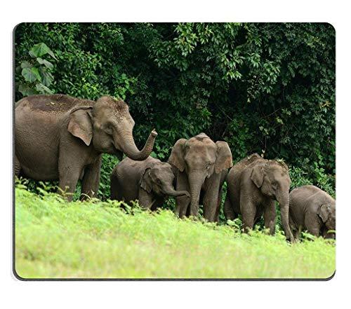 Naturkautschuk-Gaming-Mousepad schöne Familie der asiatischen Elefanten Elephas Maximus im Khao Yai Nationalpark Thailand (Mauspad/Gaming-Mauspad)