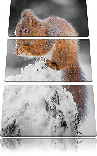 piccolo-scoiattolo-in-inverno-bianco-nero-3-pezzi-immagine-immagine-tela-120x80-su-tela-xxl-enormi-i