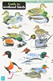 A Guide to Wetland Birds (Occasional Publications)