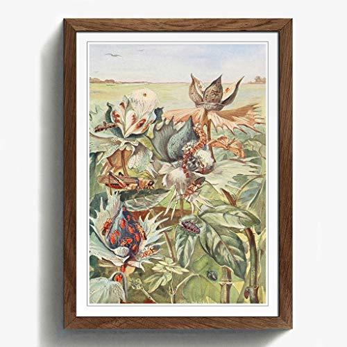 BIG Box Art Vintage Paul flanderky afrikanischen Cotton-pests Eiche, gerahmt, Print, Mehrfarbig, 24,5x 18/62x 45cm/a2-p, Holz, walnuss, 24.5 x 18-Inch/62 x 45 cm/A2 - Afrikanische Walnuss