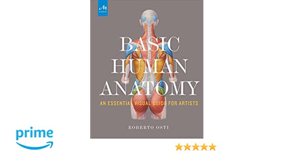Basic Human Anatomy: An Essential Visual Guide for Artists: Amazon ...