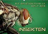 Die geheimnisvolle Welt der Insekten (Wandkalender 2020 DIN A2 quer): Faszinierende Nahaufnahmen von verschiedenen Insekten (Monatskalender, 14 Seiten ) (CALVENDO Tiere) -