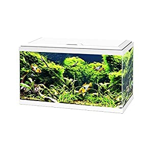Ciano White Aqua 60 LED Tropical Glass Aquarium – Includes Filter, Lights & Heater 58L