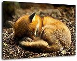 Schlafender Fuchs im Wald Format:120x80 cm Bild auf Leinwand bespannt, riesige XXL Bilder komplett und fertig gerahmt mit Keilrahmen, Kunstdruck auf Wand Bild mit Rahmen, günstiger als Gemälde oder Bild, kein Poster oder Plakat