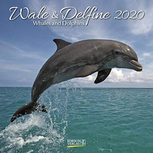 Wale und Delfine 2020: Broschürenkalender mit Ferienterminen. Tierkalender von Fischen. 30 x 30 cm