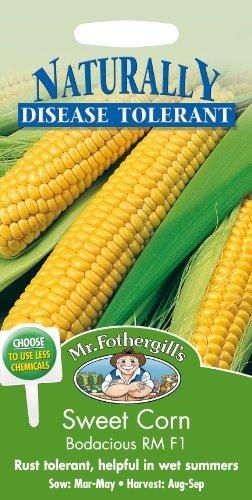 mr-fothergills-19223-sweet-corn-bodacious-rm-f1-seeds