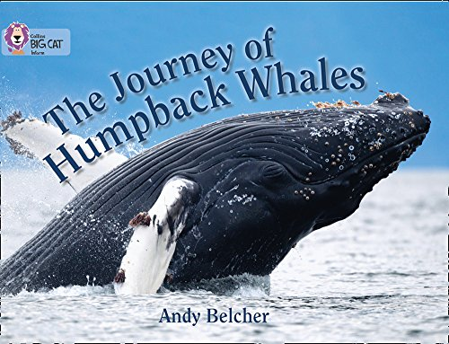 The journey of humpback whales