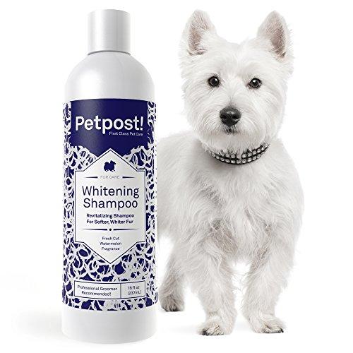 Petpost | Shampoo Blanqueador para Perros – El Mejor Tratamiento de Aclaramiento para Perros con Pelaje Blanco – Calmante Fragancia de Sandía – Para Malteses, Shih Tzu, Caniche – 237 mL