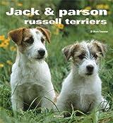 Jack et Parson russell terrier