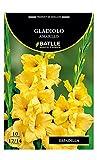 Bulbos - Gladiolo amarillo estriado naranja - Batlle