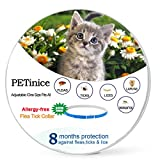 ABIsedrin Flea and Tick Collars for Cats- Best Flea Control Treatments for Cats