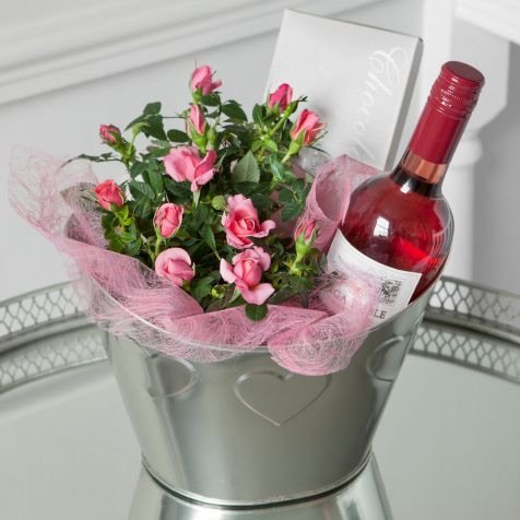 fresh-rose-plant-delivered-in-a-deluxe-ice-bucket-with-rose-wine-chocolates-uk-mainland-only