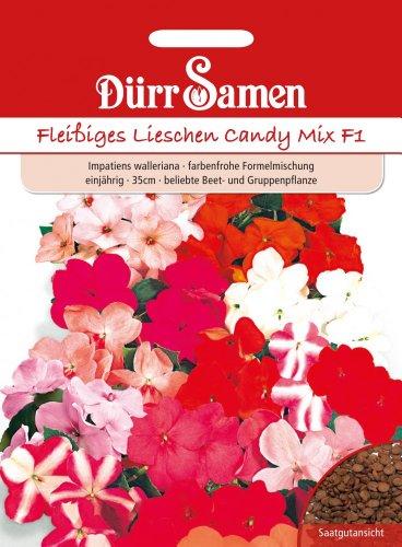 Dürr-Samen Fleißiges Lieschen Candy Mix F1