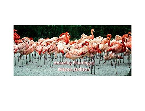 Amazing Flamingos (English Edition)