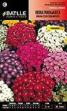 Semillas Batlle 092957BOLS - Reina Margarita enana Flor Crisantemo variada