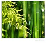 Wallario Herdabdeckplatte / Spritzschutz aus Glas, 2-teilig, 60x52cm, für Ceran- und Induktionsherde, Bambuswald mit grünen Bambuspflanzen
