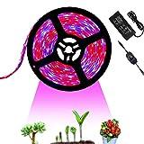 Tesfish 12V LED Pflanzenlicht Pflanze Wachsen Licht Streifen 5M mit Netzteil und Dimmer, Wasserdichtes Vollspektrum SMD 5050 Rot Blau 4: 1 Pflanzen Grow Licht für Zimmerpflanzen Aquarium Pflanze