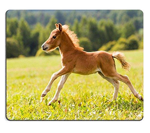 liili-mouse-pad-natural-rubber-mousepad-foal-mini-horse-falabella-image-id-15217589
