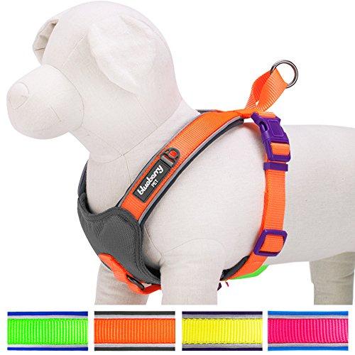 hundeinfo24.de Blueberry Pet Sommerhoffnung 39-45cm Brust Neon-Orange 3M Reflektierendes Gepolstertes Hundegeschirr Weste, Zugentlastend Klein, Passender Hundehalsband erhältlich separate