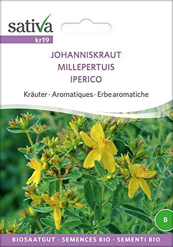 Johanniskraut | Bio-Johanniskrautsamen