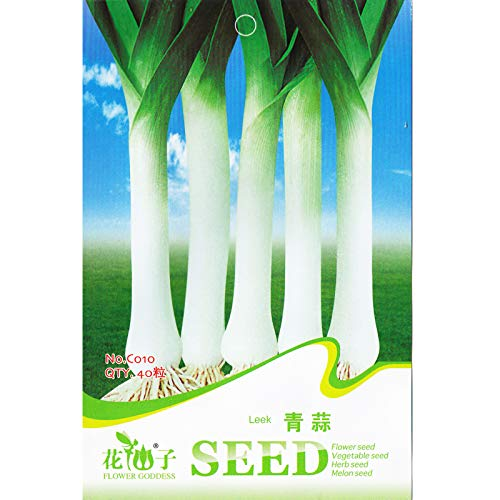 Casavidas Leek * 1 Packet 40 & # 39; s (PC) * Allium porrum * NO GMO * Gemüsegarten * Küche Garten: 1 Packet