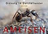 Ameisen - Ordnung im Durcheinander (Wandkalender 2018 DIN A4 quer): Eindrucksvolle Bilder der Hautflügler, die in perfekt organisierten Staaten leben. (Monatskalender, 14 Seiten ) (CALVENDO Tiere)