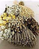 Pack Flores Secas Blancas. PORTES GRATIS