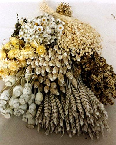 pack-flores-secas-blancas-portes-gratis