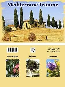 """Mini-Gewächshaus """"Südafrikas"""" mit Samen der Königsprotea, Paradiesvogelblume und Protea exima"""