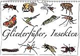 Gliederfüßer und Insekten (Wandkalender 2017 DIN A4 quer): Tierzeichnungen (Monatskalender, 14 Seiten ) (CALVENDO Tiere)