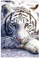 1art1 32057 Poster Félins Tigre Blanc 91 x 61 cm