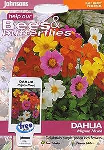 johnsons seeds - Pictorial Pack - Fiore - Dalia Mignon Mix - 40 Semi
