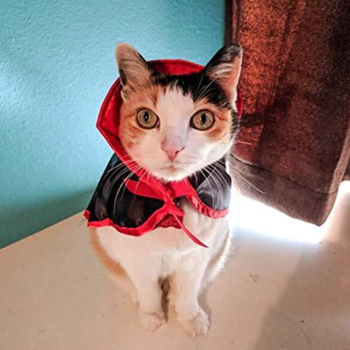 Auch Katzen-Kostüm, Fledermausflügel, Haustier-Kostüm, Haustier Kleidung für kleine Hunde und Katzen, Muffler Kappe, kleine Katzen & Hunde, Kätzchen, Welpen, Weihnachtsparty (Böse Kaninchen Kostüm)
