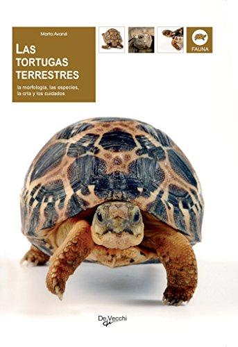 Las tortugas terrestres por Marta Avanzi