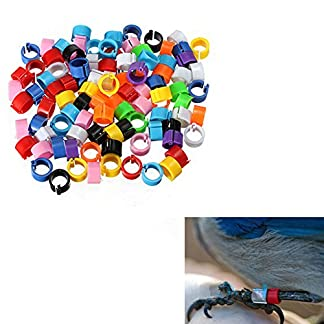 100pcs Mixed Colour Bird Foot Ring Bands Small Plastic Leg Clip Rings for Pigeon Chick Bantam Small Poultry 4