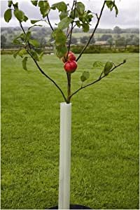 TREE GUARDS - EASY WRAP PACK OF 10