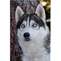 Startonight, luce nel buio Quadro su tela, imagenes del perro husky siberiano 60 cm x 90 cm