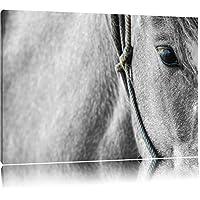 magnifico cavallo nero / bianco su tela,