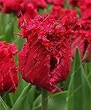 bulbi di tulipano Vero, tulipano, (non tulipano semi), bulbi da fiore simboleggia l'amore, impianto tulipanes fiore per le piante da giardino -2 lampadine 5
