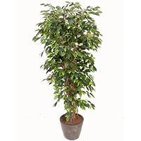 Kunstpflanzen Discount suchergebnis auf amazon de für kunstpflanzen discount com