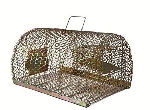 Shamsi Art Iron Trap/Cage for Catching Rat/Mouse/Rodent/Chipmunk/Squirrels, Humane(No Kill), Big Size & Durable