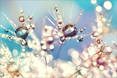 Poster 91 x 61 cm: Pusteblume mit Regenbogentropfen von Julia Delgado - hochwertiger Kunstdruck, neues Kunstposter