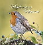 Vögel unserer Heimat (PK) 234219 2019: Aufstellbarer Postkartenkalender mit Bildern von Vögeln in der Natur der Heimat. Tisch- und Wandkalender.