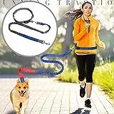 JullyeleDEgant Haustier Hundeleine Walking Training Leine Katzen Hunde Harness Halsband Leine Strap Gürtel