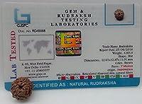 Aldomin Seven Faced/7 Mukhi Rudraksh (Lab Certified)