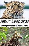 Amur Leopard - Endangered Species Picture Book