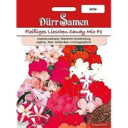 Dürr-Samen Fleißige Lieschen Candy Lachs F1