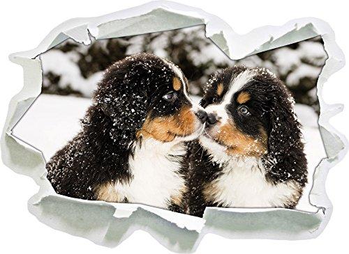 cucciolo Bovaro del Bernese sulla neve, carta 3D autoadesivo della parete formato: 62x45 cm decorazione della parete 3D Wall Stickers parete decalcomanie